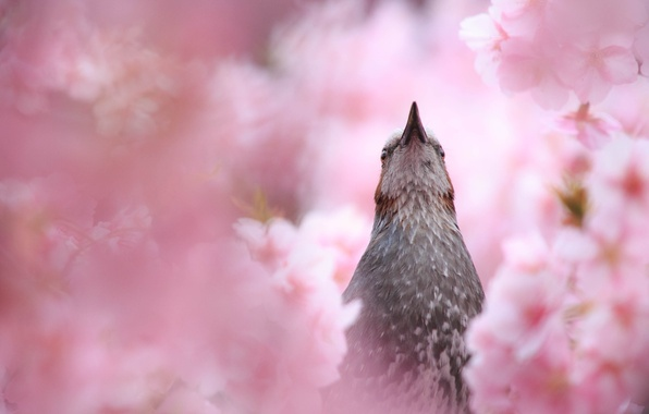 Картинка лето, природа, птица, цветение