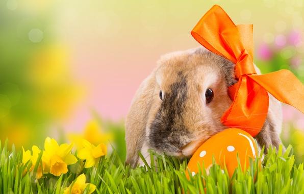 Картинка трава, цветы, природа, праздник, яйцо, весна, кролик, Пасха, бант, нарциссы, боке, Easter