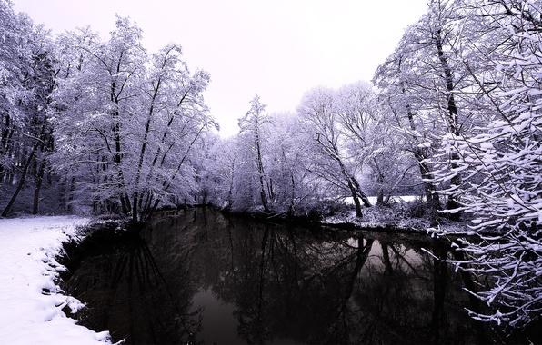 Картинка зима, лес, вода, снег, деревья, природа, река