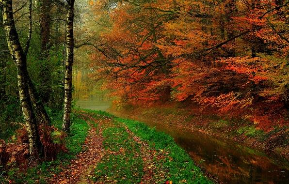 Картинка осень, лес, листья, вода, деревья, природа, река, hdr, прогулка, forest, river, trees, nature, water, autumn, …