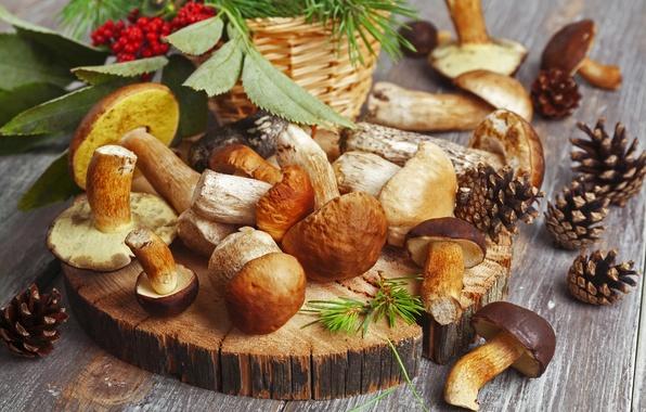 Картинка осень, природа, ягоды, стол, грибы, еда, размытость, красные, белые, шишки, рябина, ням-ням, боке, wallpaper., подберезовики
