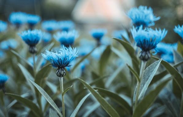 Картинка зелень, трава, макро, цветы, голубой, куст, букет, весна, клумба, цветение