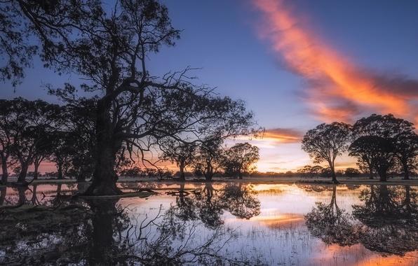Coonawarra Australia  city images : Coonawarra, australia, show of light, gum trees обои фото ...