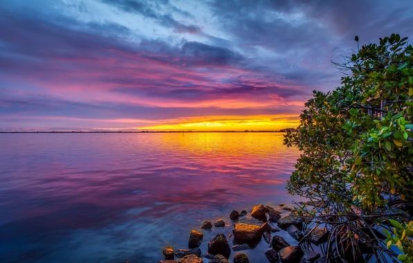 Картинка море, небо, облака, закат, камни, дерево, берег