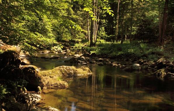 Картинка Вода, Природа, Деревья, Лес, Камни