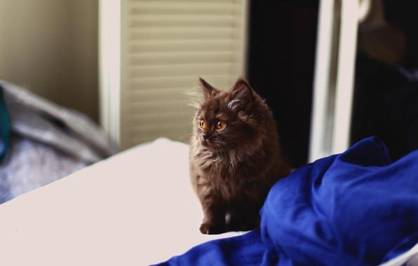 Фото обои котенок, шерсть, пушистый, смотрит