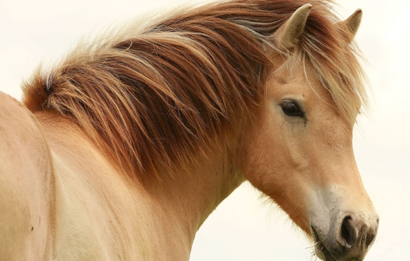 Картинка глаз, конь, лошадь, грива