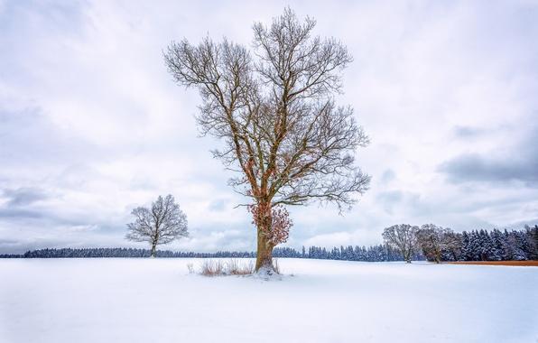 Картинка зима, поле, лес, небо, снег, дерево