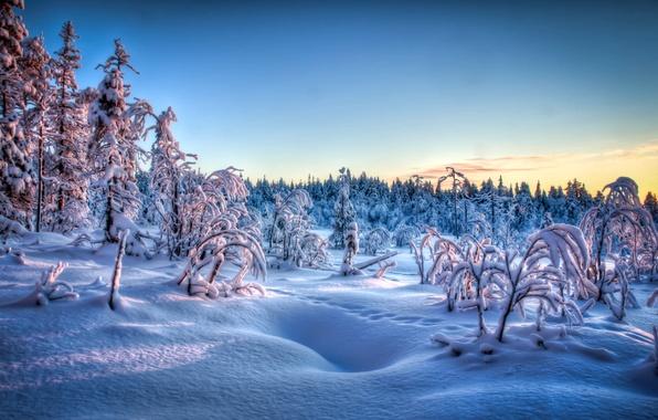 Картинка зима, иней, снег, деревья, закат, следы, вечер