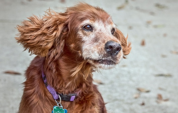 Картинка dog, pet, supermodel