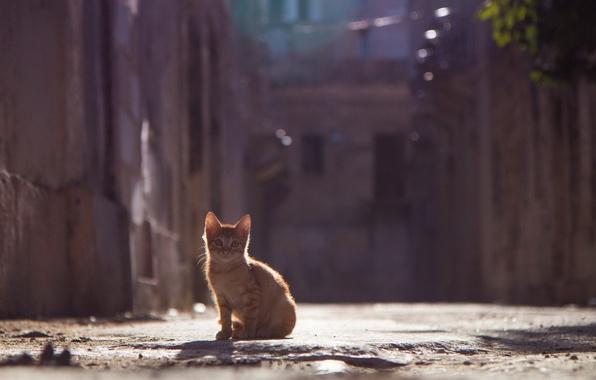 Картинка лето, взгляд, котенок, улица, рыжий, боке