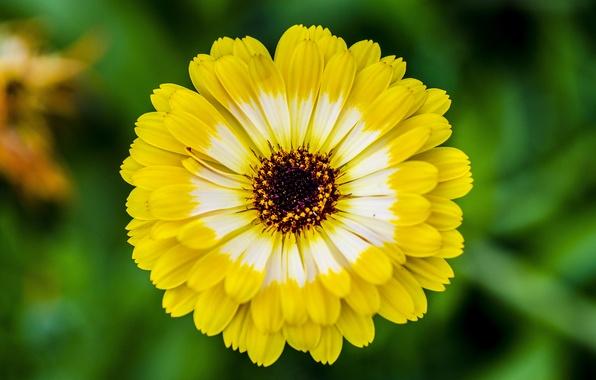 Картинка зелень, цветок, лето, макро, желтый, настроение, ярко