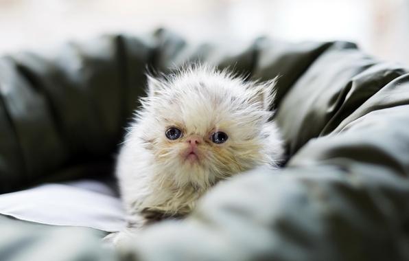 Картинка кошка, взгляд, уют, дом, фон
