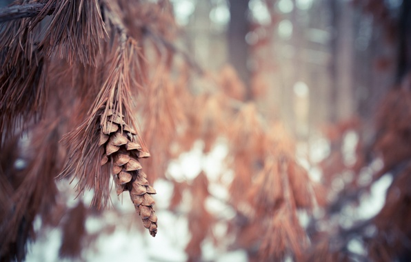 Картинка лес, природа, ветка