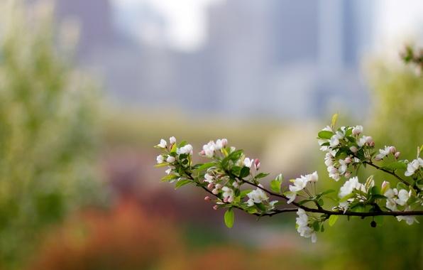 Картинка макро, блики, цвет, ветка, весна, яблоня, боке, розмытость