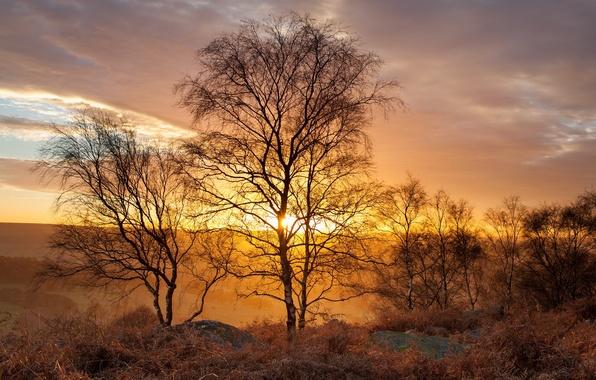 Картинка light, landscape, Golden Birch trees, Peak District, Gardom's Edge
