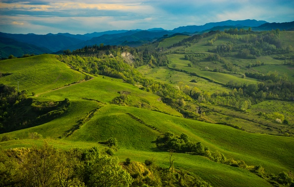 Картинка зелень, трава, деревья, холмы, поля, Италия, луга, Тоскана, Tuscany