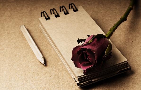 Картинка цветы, стиль, фон, роза, блокнот, карандаш, красная, широкоформатные, полноэкранные, HD wallpapers, цветочек, широкоэкранные, блокнотик