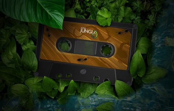 Картинка зелень, листья, макро, листва, растения, ящерица, муравьи, джунгли, кассета