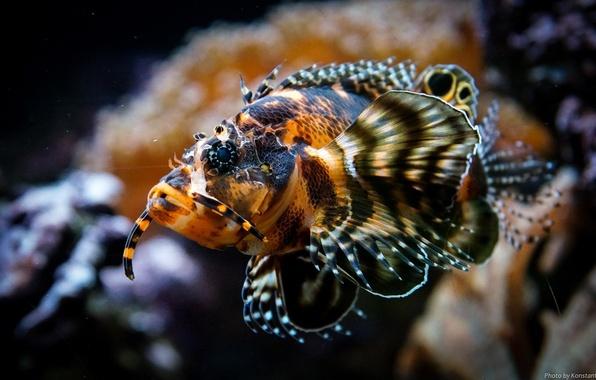 Картинка аквариум, рыба, подводный мир, плавники, под водой