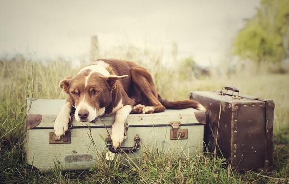 Картинка трава, собака, багаж, чемоданы