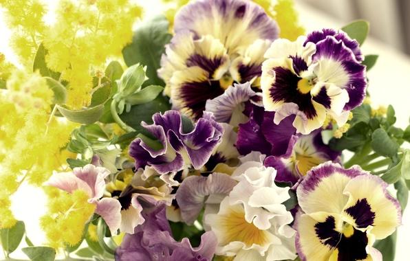 Виола анютины глазки цветы лепестки