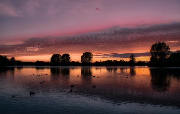 Картинка небо, облака, деревья, пейзаж, закат, птицы, озеро, отражение, Англия, утки, вечер, Великобритания, оранжевое, малиновое