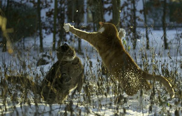 Картинка снег, кошки, коты, вечер, драка, cat, Mats&Muffi's, зимв