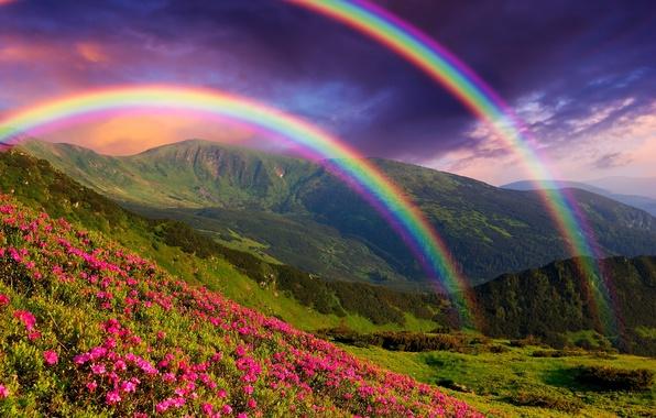 Картинка пейзаж, цветы, горы, природа, радуга, landscape, nature, flowers, mountains, rainbows