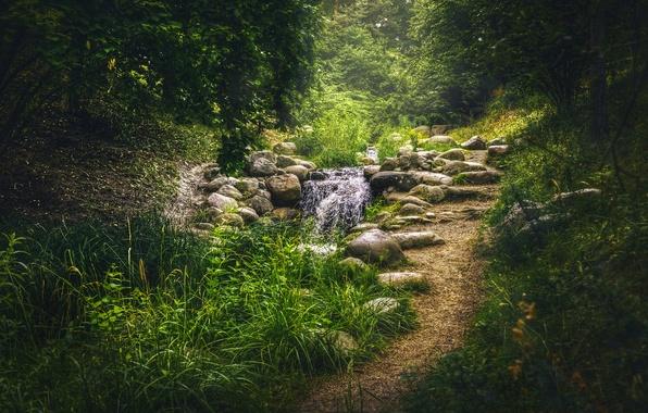Картинка зелень, трава, деревья, парк, ручей, камни, Германия, тропинка, кусты, Берлин, Britzer Garten