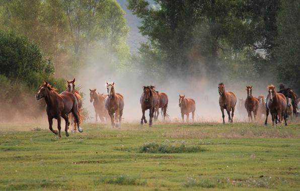Картинка природа, кони, бег, табун