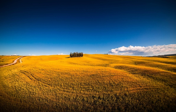 San Quirico d'Orcia Italy  city pictures gallery : ... san quirico d'orcia, siena, italy, montalcino, поле, лето
