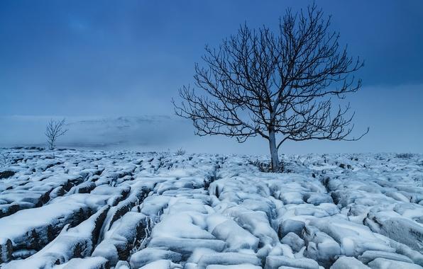 Картинка зима, поле, снег, природа, дерево