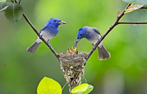 Картинка птицы, природа, фон