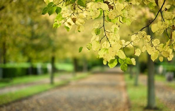Картинка дорога, осень, листья, макро, парк, дерево, ветка, размытость