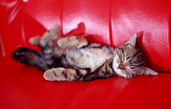 Картинка котенок, диван, сон