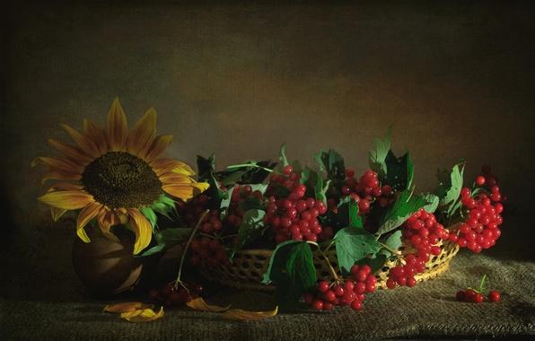 Картинка ягоды, подсолнух, текстура, калина