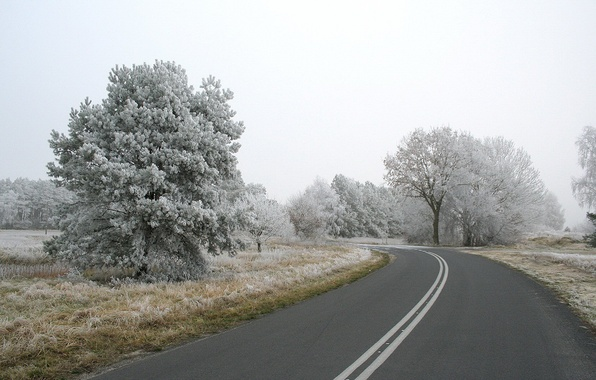 Фото обои дорога, деревья, снег