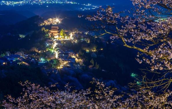Картинка лес, горы, ночь, ветки, огни, дома, Япония, сакура, панорама