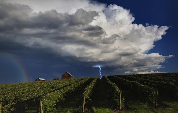 Картинка небо, облака, молния, радуга, домик, виноградники