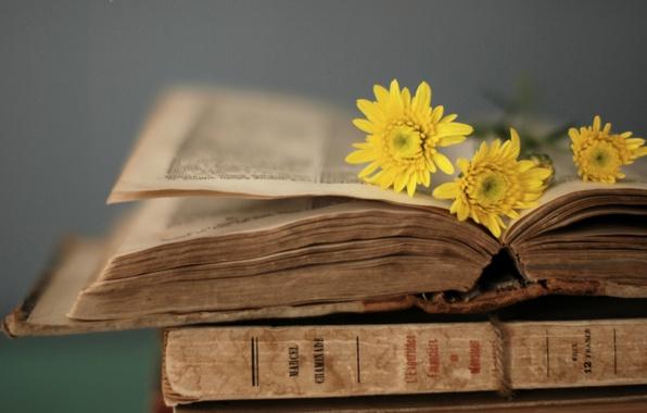Картинка цветы, желтый, стиль, фон, обои, книга, книжка, страницы, wallpapers