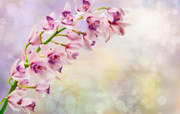 Фото обои цветы, flowers, orchid, орхидея, ветка