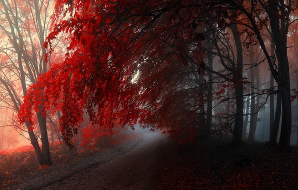 Картинки осень в лесу четкие большие фото