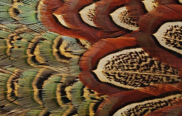 Картинка птица, перья, окрас