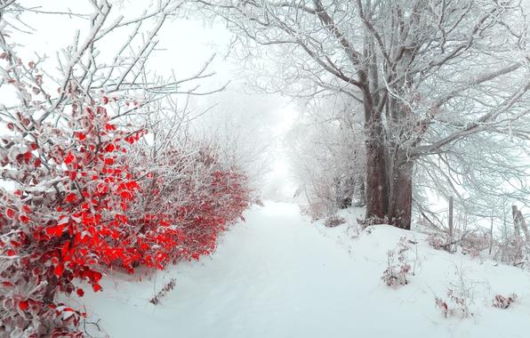 Картинка зима, листья, снег, природа, туман, дерево, утро, красиво, панорама, Новый год, new year, аллея, Пейзажи, …