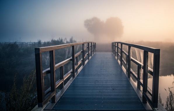 Картинка мост, туман, река, утро