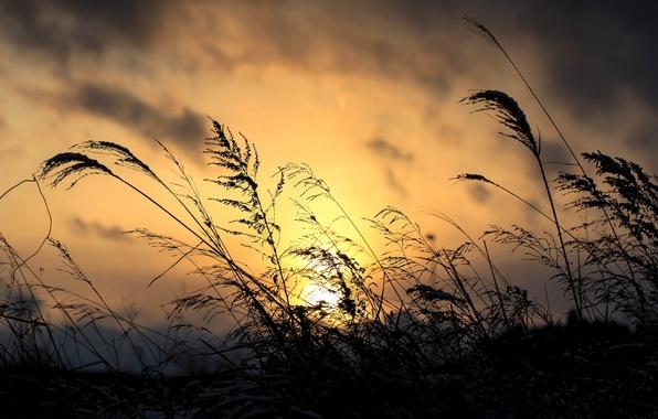 Картинка небо, трава, облака, макро, закат, тучи, растение