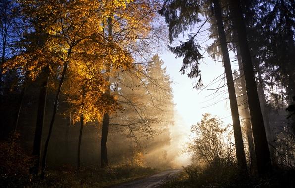 Картинка осень, листья, свет, природа, дерево