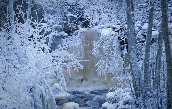 Картинка зима, иней, лес, снег, деревья, ручей, речка, Швеция