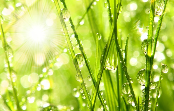 Картинка вода, капли, макро, природа, роса, утро, grass, nature, water, macro, травинки, drops, morning dew